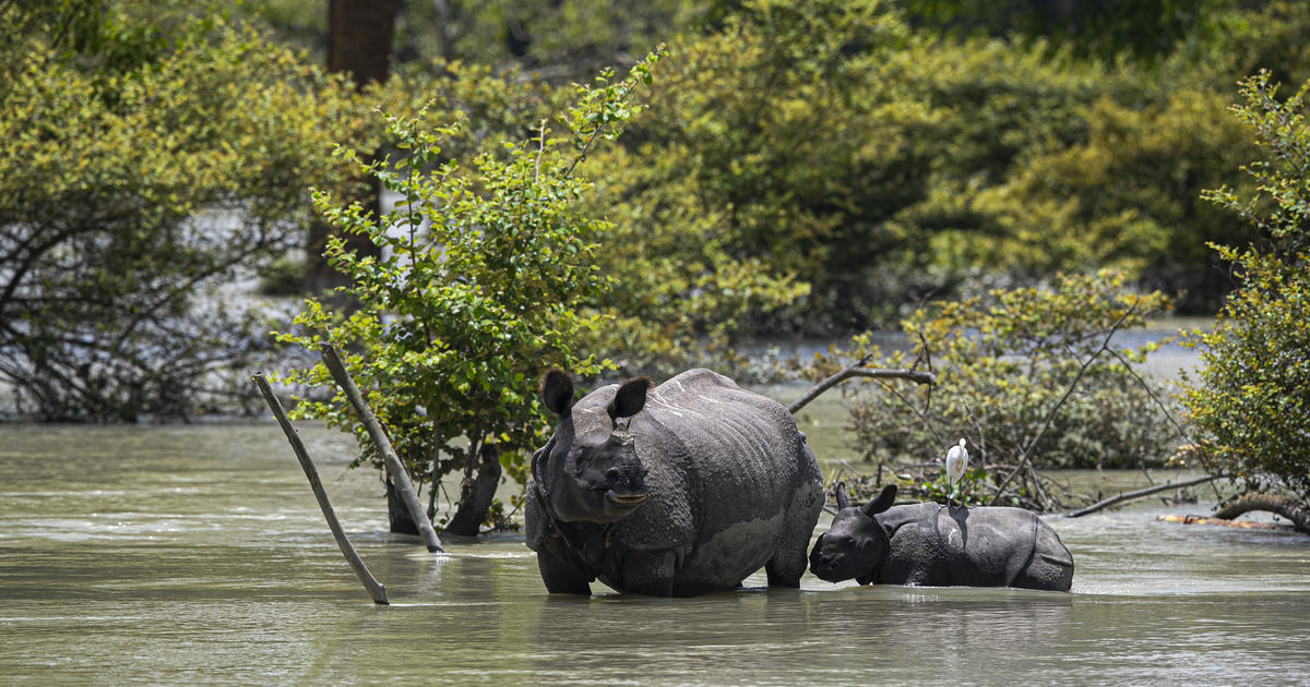 Monsoon flooding kills over 80 people and 9 endangered rhinos in India