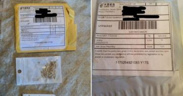 Mystery seeds from China are landing in Americans' mail boxes