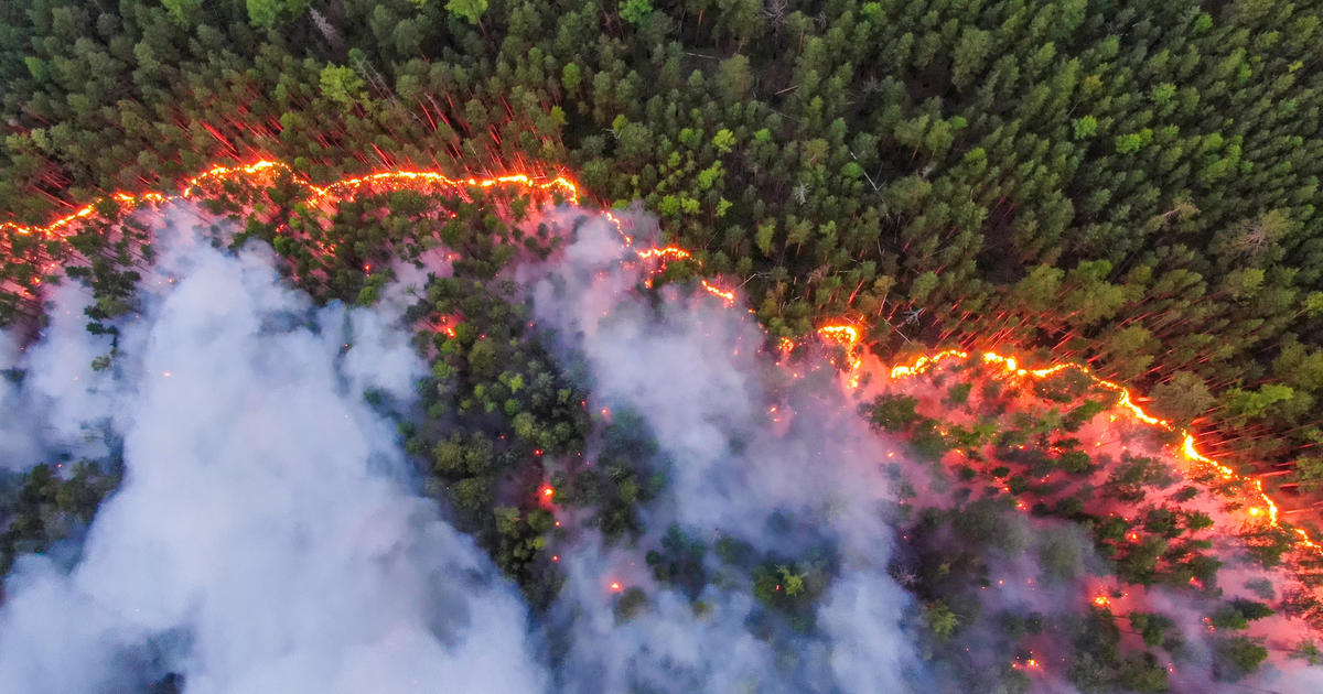 Wildfires in Siberia have burned down an area larger than Greece