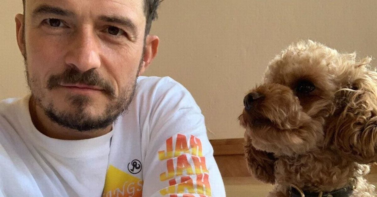 Orlando Bloom is living a 'waking nightmare' as he gives update on missing dog