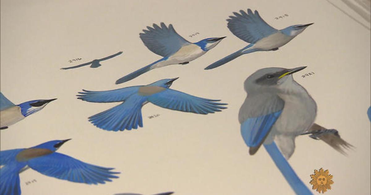 Bird illustrator David Allen Sibley