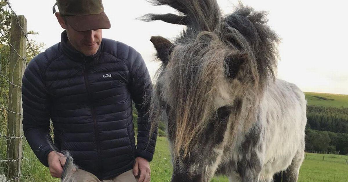 Matt Baker devastated by tragic loss as beloved Shetland pony dies