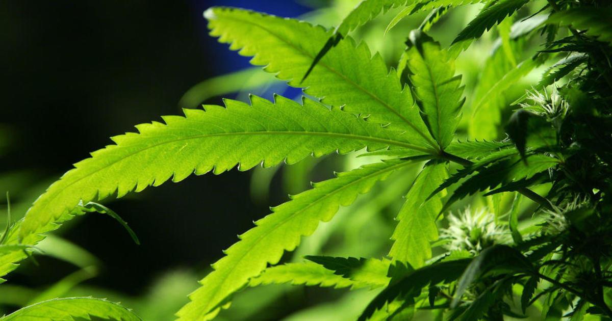 Marijuana legalization is defying the partisan divide